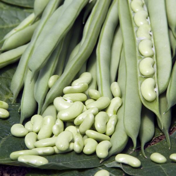 Haricot flageolet flajoly la bonne graine - Variete de haricot vert ...