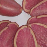 Pomme de terre Rouge des Flandres ®