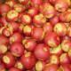 Pomme de terre Miss Blush