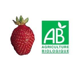 Plant de fraisier Bio Belrubi
