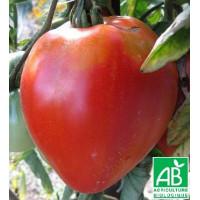 Tomate Coeur de Boeuf Bio