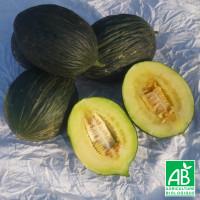 Melon Vert Olive d'Hiver Bio