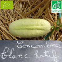 Concombre Blanc Hâtif Bio
