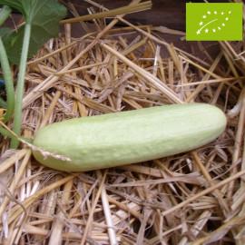 Concombre Gele Tros Bio