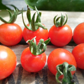 Tomate Tiny Tim