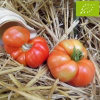 Tomate Reine des Hâtives Bio