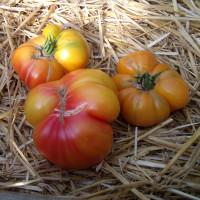 Tomate Ananas Bio