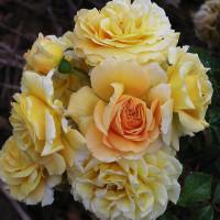 Rosier Mireille Dumas ®
