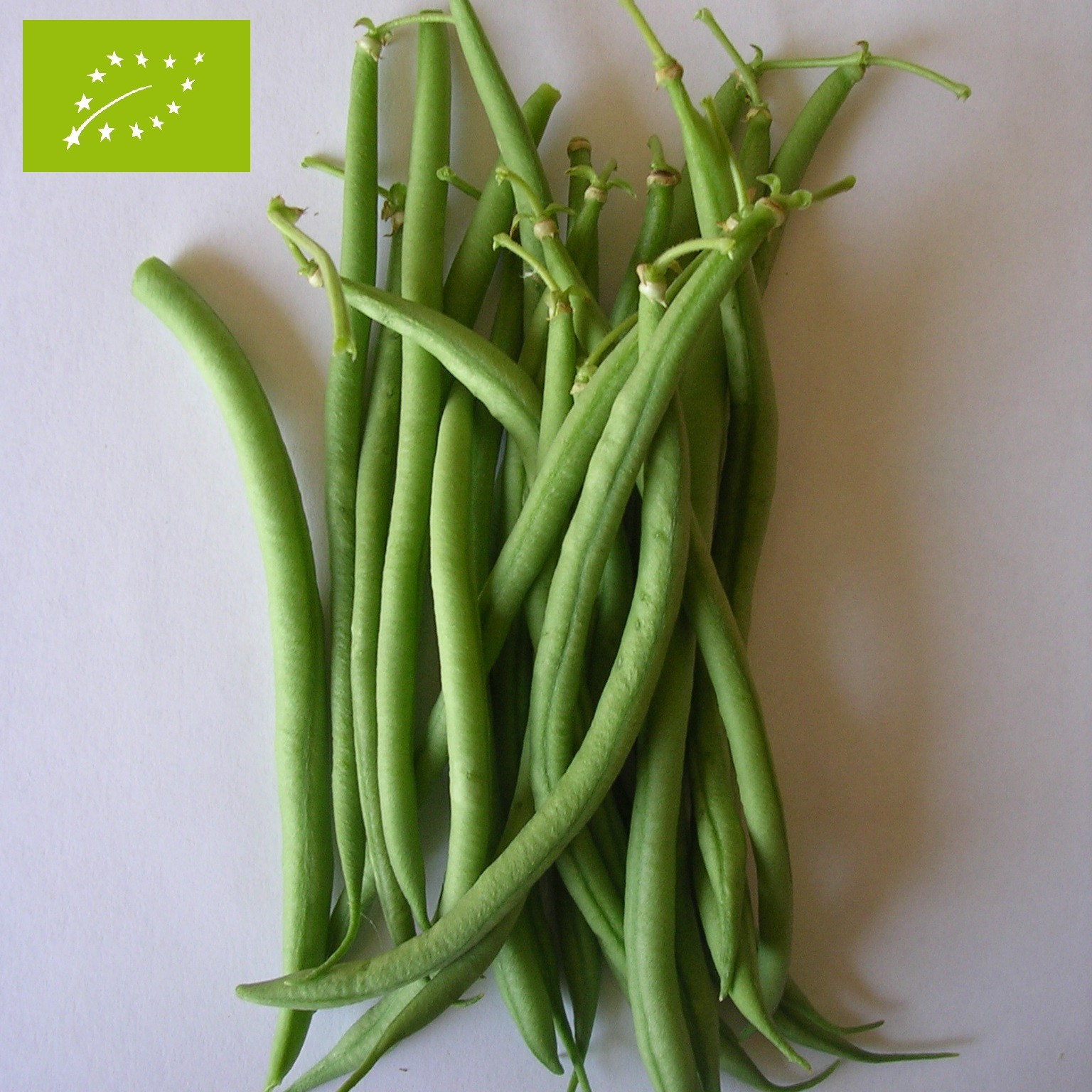 nos graines potagères de haricot nain aiguillon bio - la bonne graine