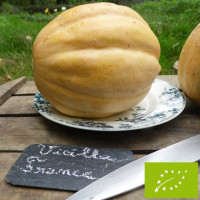 Melon Vieille France Bio