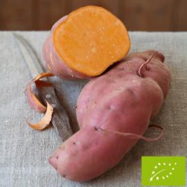 Patate Douce Bio en godet pré-pousssé - ORANGE (godet vert)