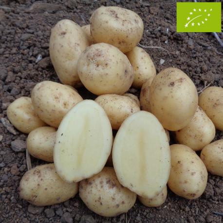 Pomme de terre Monalisa BIO