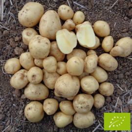 Pomme de terre Vitabella BIO
