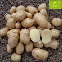 Pomme de terre Blanche® BIO