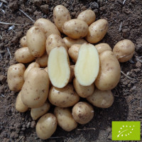 Pomme de terre Anoë BIO