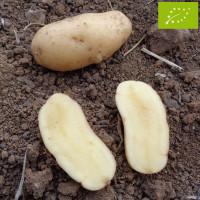 Pomme de terre Belle de Fontenay BIO