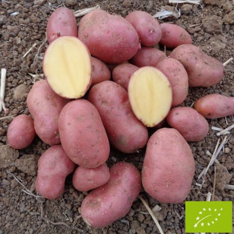 Pomme de terre Cheyenne BIO