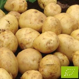 Pomme de terre British Queen BIO
