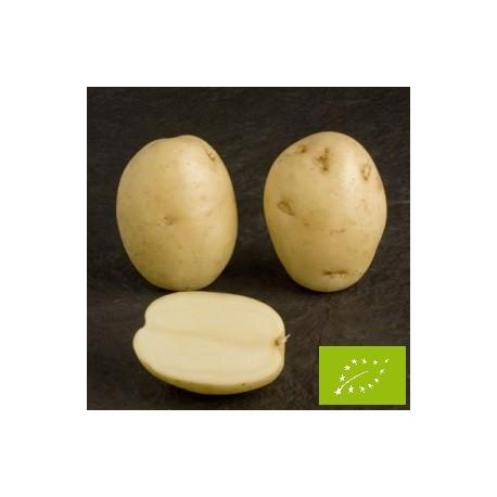Pomme de terre Maris Peer BIO