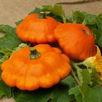 Pâtisson Orange