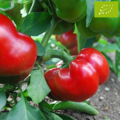 Poivron Tomate Bio