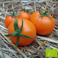 Tomate Moon Glow Bio