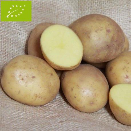 Pomme de terre Colleen BIO