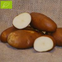 Pomme de terre Golden Wonder BIO