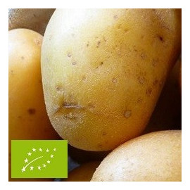 Pomme de terre Maïwen BIO