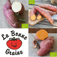 Pack Patate Douce BIO en godets