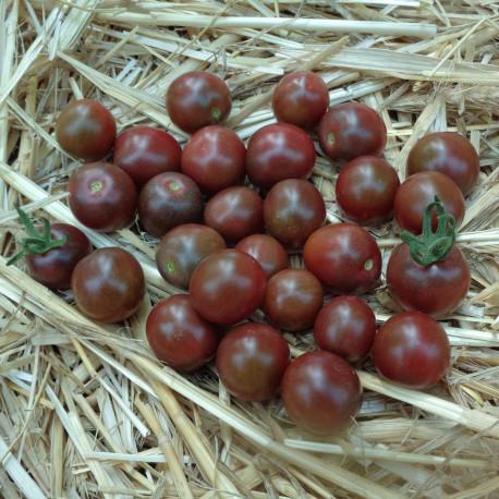 Tomate Black Opal