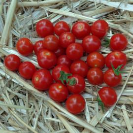 Tomate Sweet Aperitif
