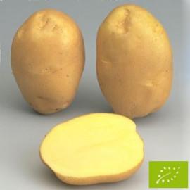 Pomme de terre Ostara BIO