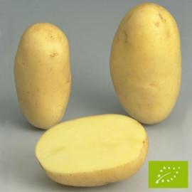 Pomme de terre Emeraude BIO