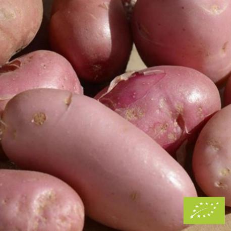 Pomme de terre Sarpo Una Bio