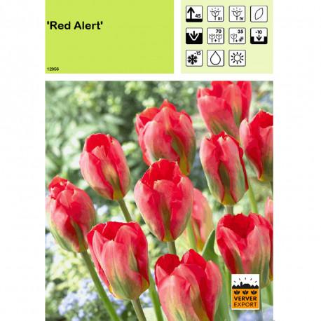 Tulipe Red Alert