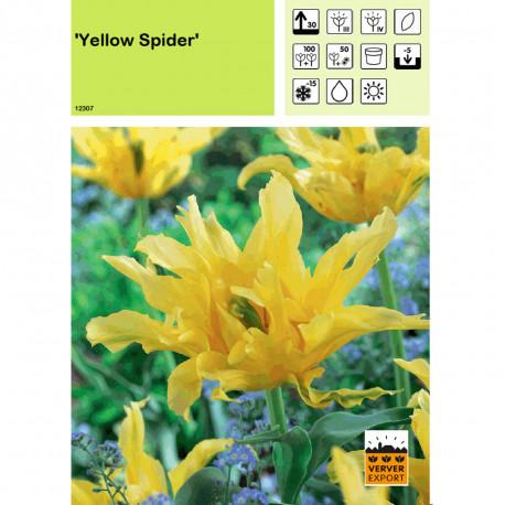 Tulipe Yellow Spider