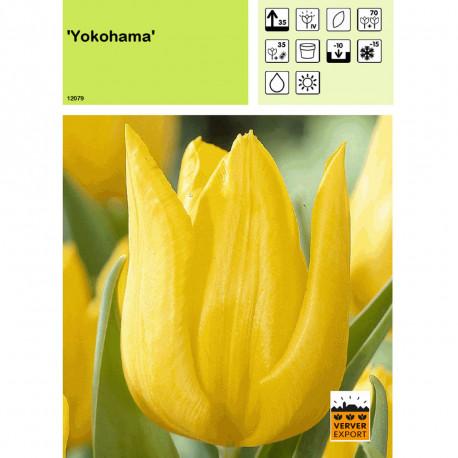 Tulipe Yokohama